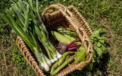 Dieta depurativa en primavera para sentirte mejor
