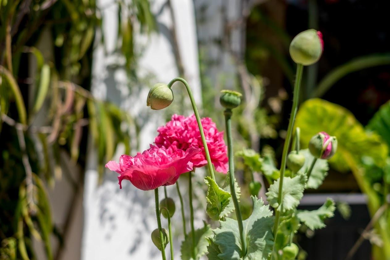 Flores en el huerto de la naturopata en Barcelona Dorte Froreich